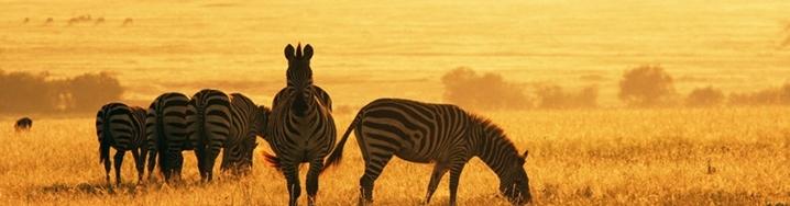 Zuid Afrika Klein Karoo