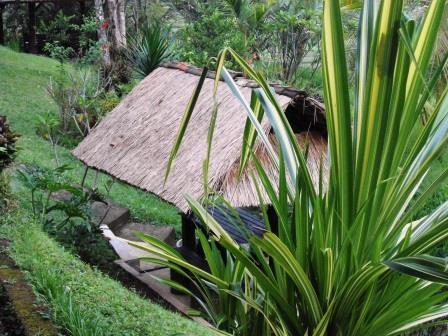 Bali Belimbing